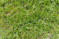 Grass texture natural green field seamless background Royalty Free Stock Images