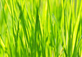 Grass texture in the photo Stock Photos