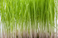 Grass tips Royalty Free Stock Images