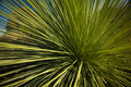 Grass Tree Royalty Free Stock Image