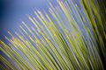 Grass Tree Details Royalty Free Stock Images