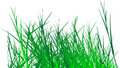 Grass vector Stock Photo