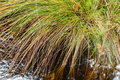 Grass at waters edge Royalty Free Stock Photo