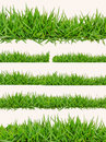 Grass on white background green Stock Images