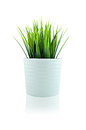 Grass in white pot Royalty Free Stock Image