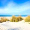 Grass on a white sand dunes beach, ocean and sky Stock Image