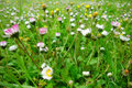 Grass and wildflowers in the morning background Stock Photo