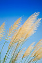 Grass in the wind. Stock Photos