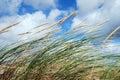 Tráva v vítr