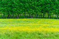 Grass with yellow flowers Stock Image