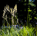Grasses Royalty Free Stock Photos