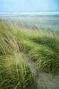 Grasses at the beach Royalty Free Stock Photo