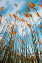 Grasses detail field sapin andalusia almeria Royalty Free Stock Photography