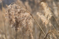 Grasses dried in the nature Stock Photo