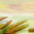 Grasses on painting design of grass flowers background Royalty Free Stock Photography