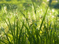 Grasses and Reeds Royalty Free Stock Photo