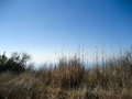 Grasses at topanga of the state park eco system Royalty Free Stock Photography