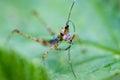Grasshopper antena Royalty Free Stock Photo