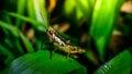 Grasshopper on branch, Macro