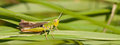 A grasshopper on the grass Stock Photos