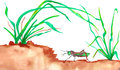 Grasshopper and grass reeds watercolor walking on ground in dirt with green painting Stock Photos