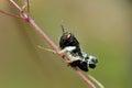 Grasshopper on green leaf in summer Stock Image
