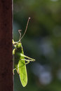 Grasshopper a green on the window Royalty Free Stock Photos