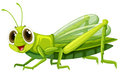 Grasshopper with happy face Royalty Free Stock Photo