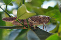 Grasshopper among leaves Royalty Free Stock Images