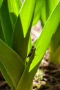 Grasshopper sitting on the leaf Royalty Free Stock Photo