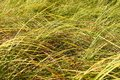 Grassland background in illinois of pretty grass an prairie Royalty Free Stock Photo