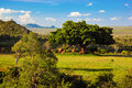 Grassland, bush and savanna landscape. Tsavo West, Kenya, Africa Stock Photo