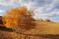 Grassland in the fall Stock Photography
