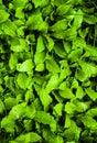Grassland lawn; sward; greensward; grass-plot; sod Royalty Free Stock Photo