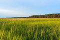 Grassland marshlands on the eastern shore of virginia Stock Photo