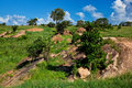 Grassland with rocks savanna. Tsavo West, Kenya, Africa Stock Photo