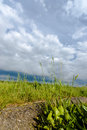 Grassland and storm cloud green Royalty Free Stock Photography