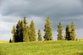 Grassland with trees in summer kalajun located xinjiang china Royalty Free Stock Image