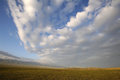 Grassland with white clouds in summer Royalty Free Stock Photo