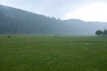 Grasslands in the rain Royalty Free Stock Photos