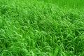Grassy Background Stock Image