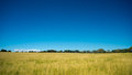 Grassy field with blue skies a on a bright sunny day the in the background this image is great for wallpapers and desktop Stock Images