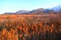 The Grassy Field of Salt Lake City Royalty Free Stock Photo