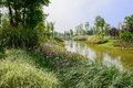 Grassy and flowering waterside in sunny spring chengdu china Stock Photography