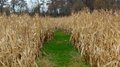 Grassy foot path through a corn field way running the center of Stock Photography