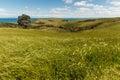 Grassy hills on new zealand coast Royalty Free Stock Photos