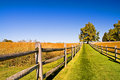 Grassy Lane on a Fall Afternoon - 2 Stock Photo