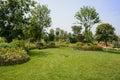Grassy lawn on flowering hillside in sunny summer chengdu china Stock Photography