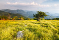 Grassy meadow on appalachian trail north carolina tennessee landscape of large bald along the in the roan highland blue ridge Royalty Free Stock Photo