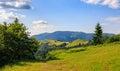 Grassy meadow on hillside Royalty Free Stock Photo
